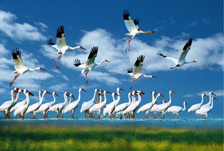 南昌到鄱阳湖1日游游中国最大淡水湖,观世界白鹭候鸟栖息天堂