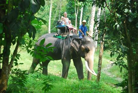 泰国-曼谷骑大象1
