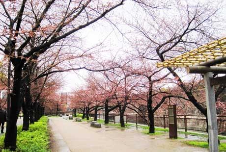 日本-大阪城公園1