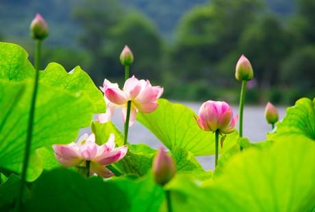 杭州-西湖5