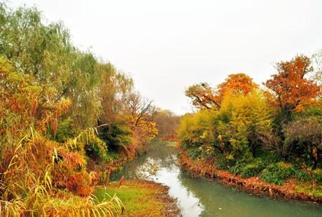 杭州-西溪湿地6