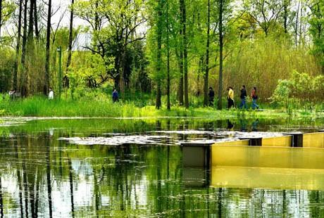 杭州-西溪湿地16
