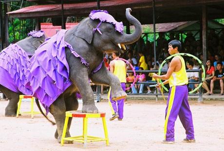 泰国-大象1
