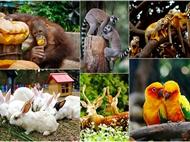 抚州仙盖山动物园、观国宝大熊猫1万博manbext手机官网