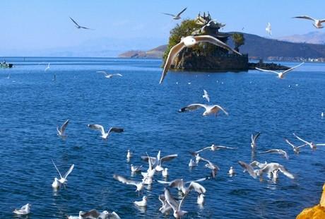 【遇见香格里拉】丽江+大理+香格里拉 双飞6日游丽江有你的诗和远方