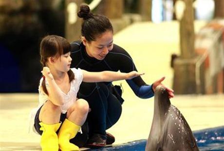 南昌万达海洋乐园 单人票近距离看海豚、来自海洋的味道